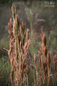 a-mode-f4-early-morning-grasses-bokeh-900-004
