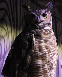owl-blue-light-649x800