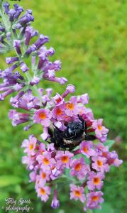 cold-wet-bumblebee-sleeping