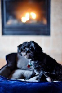 mishka-standing-up-in-bed-fireplace-534x800