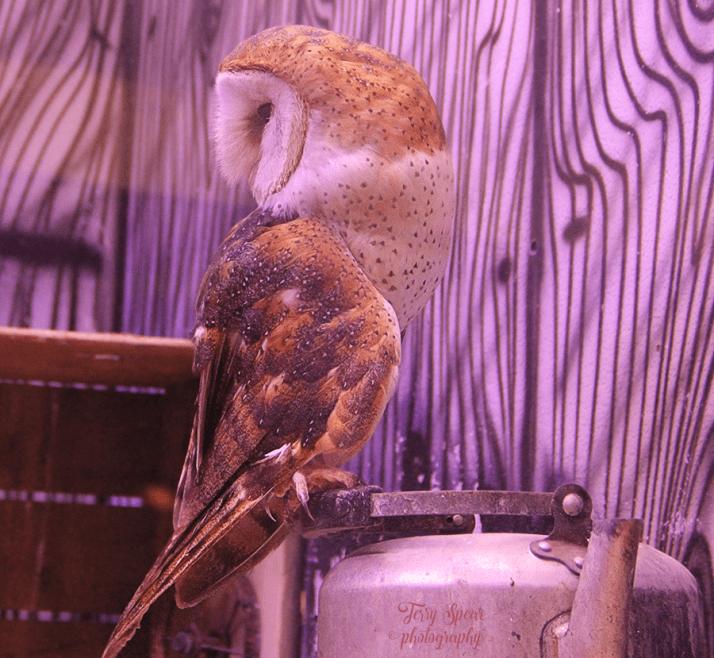 cameron-park-zoo-barn-owl-dehaze-900-214