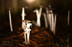 mushrooms-with-a-flashlight-900-005