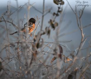 orange-and-black-bird-900-495