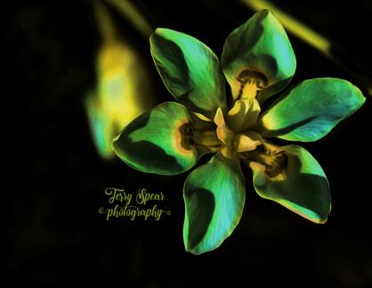 butterfly-iris-flourescent-oil-900-011