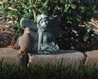 dove-and-fairy-900-089