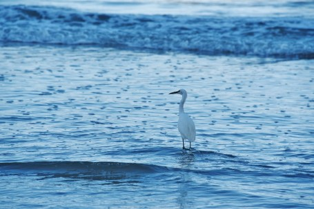 heron-in-blue-water-800x534