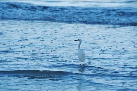 heron-in-blue-water-800x534