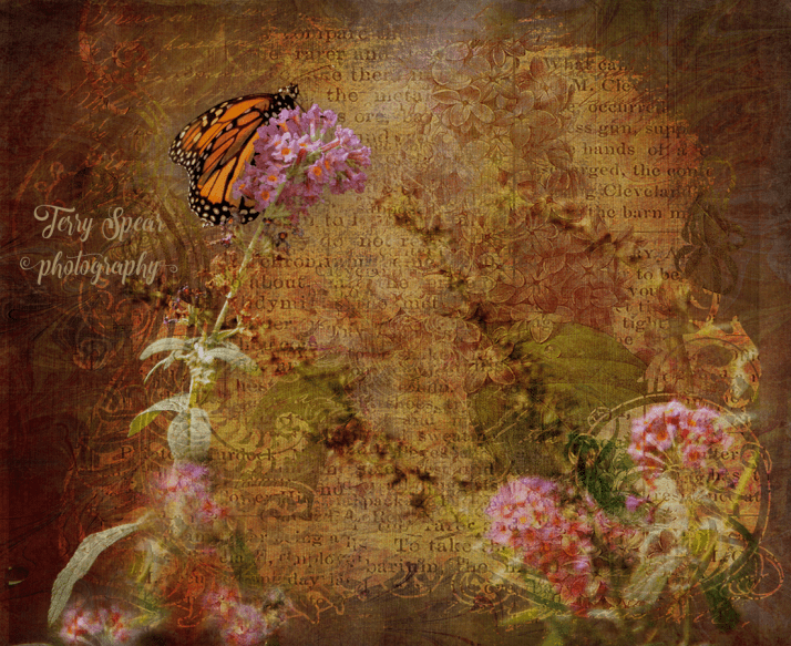 butterfly-composite
