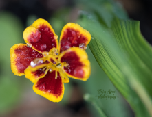 flower 900 046