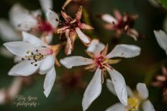 flowers on shrub 900_9464