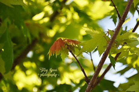 Orange leaf in bloom 900 5592