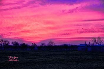 pink sunrise birds 500