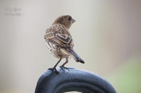 sparrow 900 002