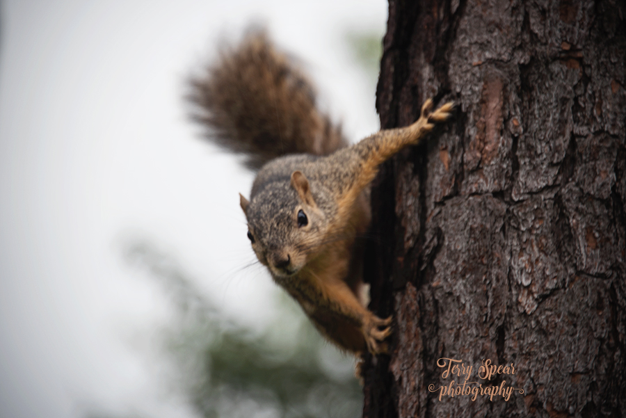 squirrel on tree taunting me 900 057