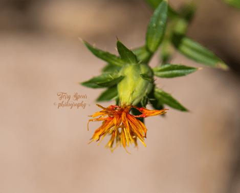 weed flower 900 017