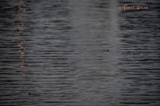 Hurricane Harvey storms 2 turtles in pond 900 066