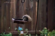 Hurricane Harvey storms wet squirrel on feeder 900 018