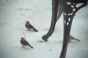 sparrows Hurricane Harvey 900 501