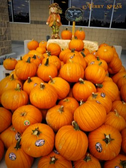 pumpkins fall grocery store
