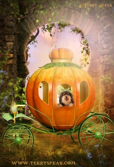 Tanner frog prince in pumpkin carriage background1 900 final