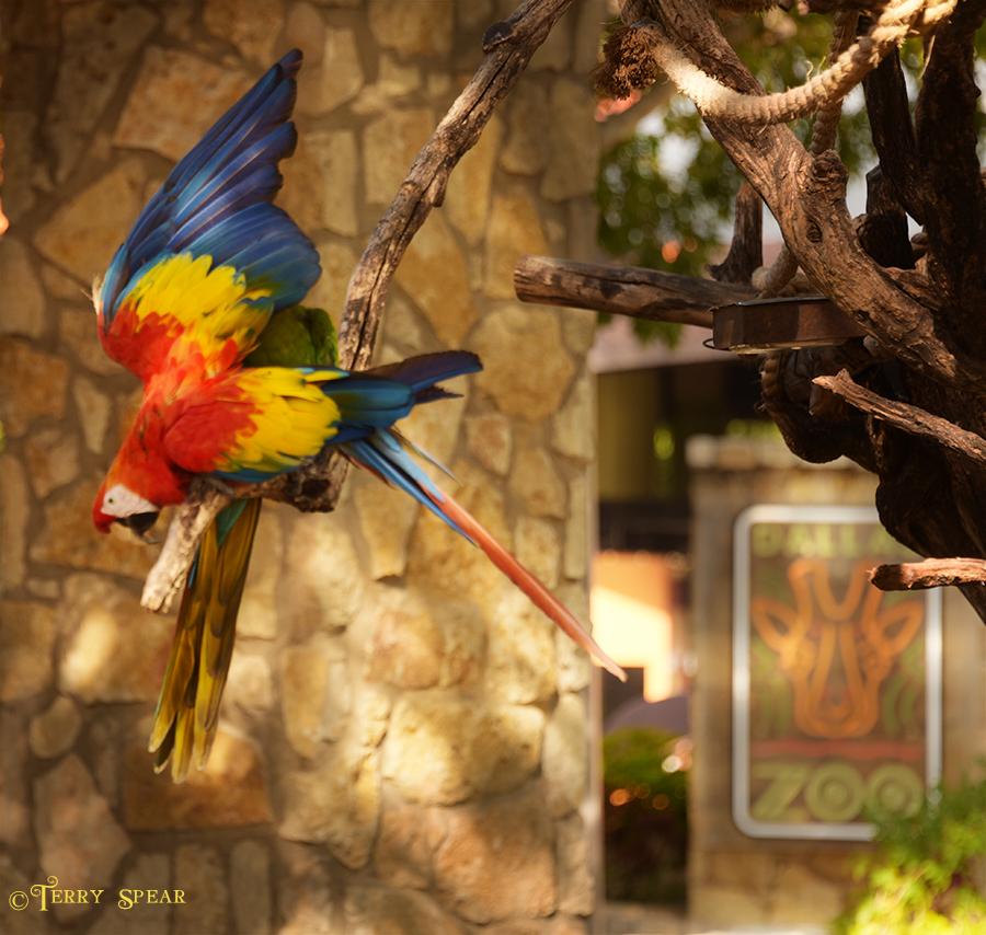 Macaw Dallas Zoo 900 1831