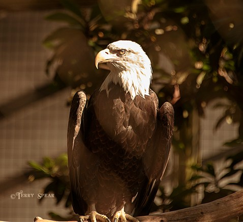 Eagle 900 1616