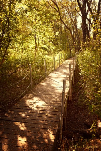 wetlands boardwalk spiced color 900 228