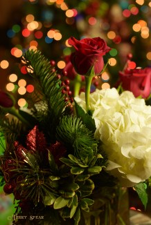 flowers and Christmas lights 1000 090