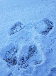 Snow angel deer prints