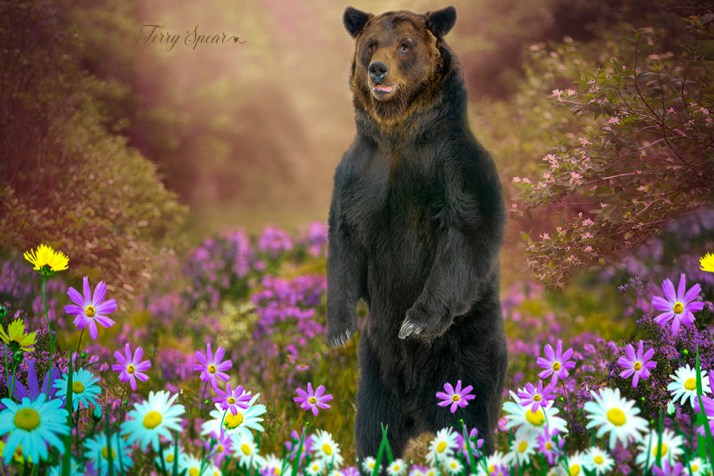 Bear and purple flowers 1000