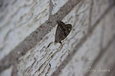butterfly 1000 002