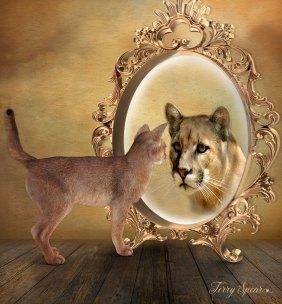 cougar wannabe