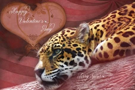 jaguar head resting on branch Valentine's Day 900 565
