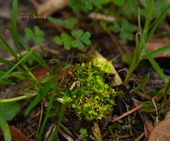 moss and clover 1000 009