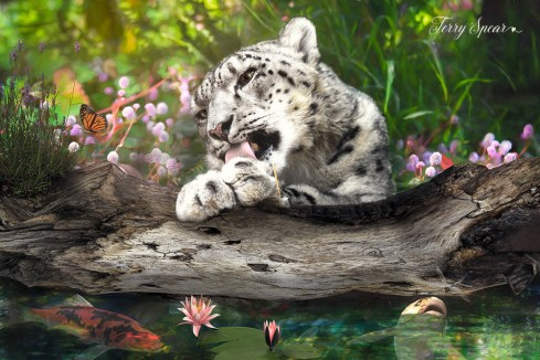 snow leopard fair garden1 tone down vibrance 1000