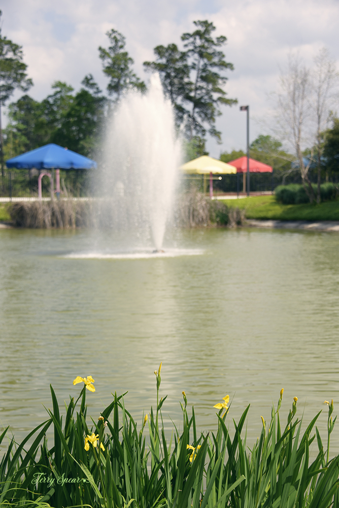 irises and fountain 1000 061