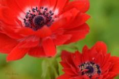 macro flowers 1000 001