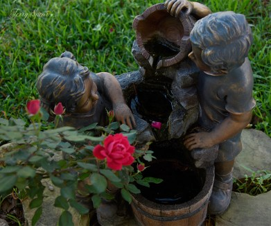 roses next to fountain 1000 050