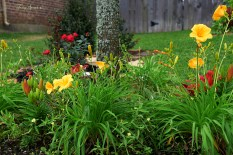 front flowerbed 1000 004