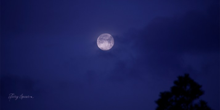 full moon cloudy morning 1000 010