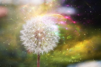 Rowena's dandelion