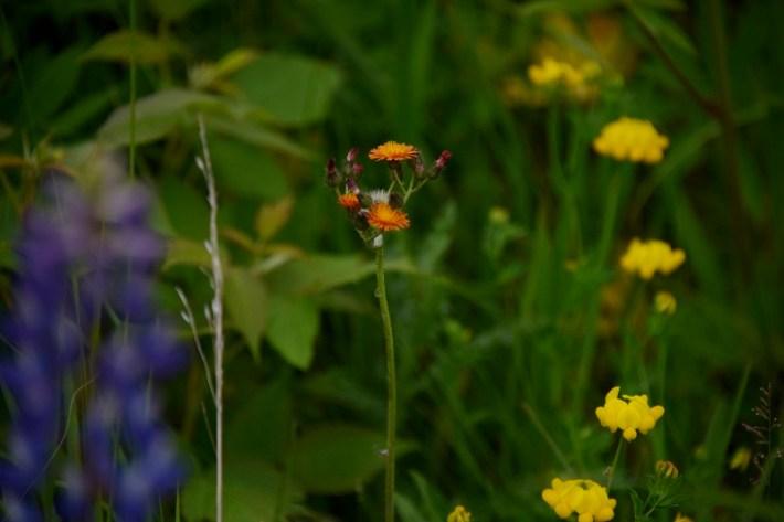wildflowers (800x534)