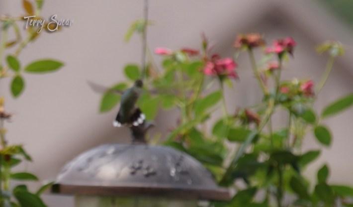 hummingbird 1000 1007