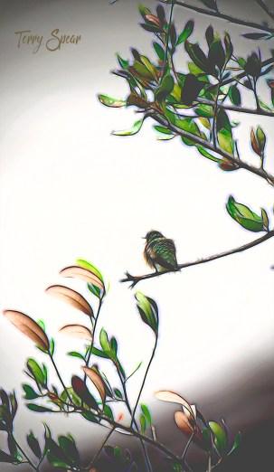 hummingbird, glow 1000 074