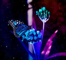 monarch butterfly blue version texture fairy dust 1000 069