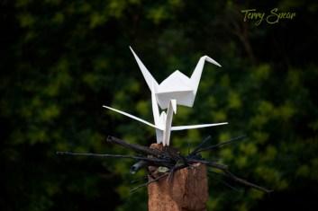 Nesting origami birds 1000 Minnesota 4556