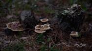walk mushrooms 1000 022