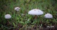 walk mushrooms 1000 032