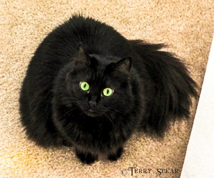 black cat Blaine's 500