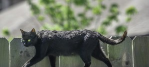 black cat on fence